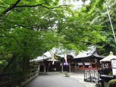 tachigi3.jpg